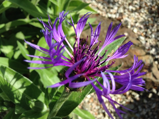 fiore web 3