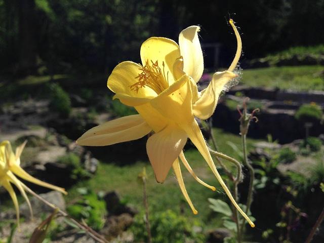 fiore web 4